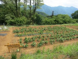 施設 - 貸し農園