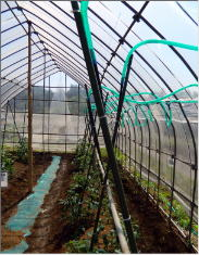 炭酸ガスを利用した栽培実験