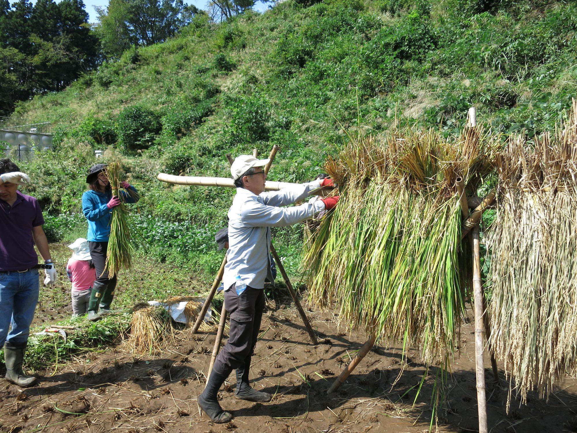 棚田プロジェクト 稲刈りのご案内